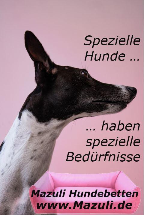 Mazuli Hundebetten für spezielle Hunde